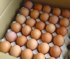 инкубационные яйца бройлера кобб500 рос308 рос708 мясояичные,яичные