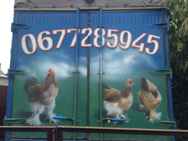 Продам куры. птица