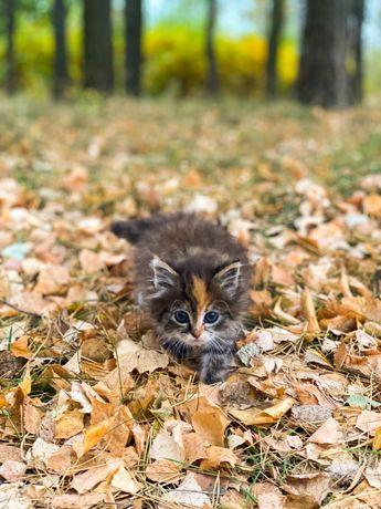 Котик у добрі руки кіт кішка кошеня