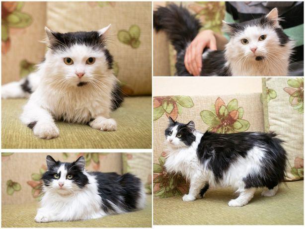Кото-семья, кошка - мама (2 г) и котик - сын (9 мес)