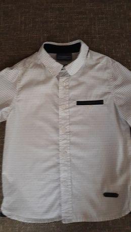 Koszula chłopięca cocodrillo 104