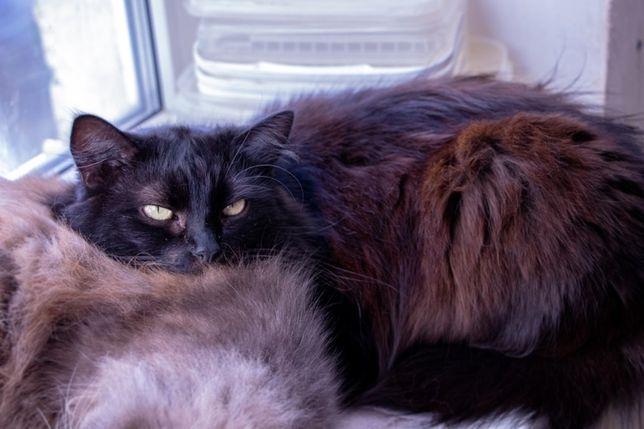 Пушистая кошка, котята в добрве руки, котики бесплатно киев
