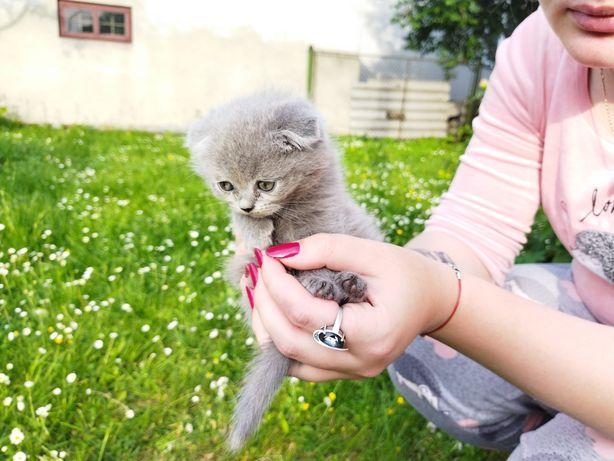 плюшевий котик весловухий