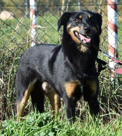 Poszukiwany dom dla psa, który wiele w życiu przeszedł