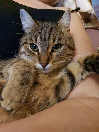 Пропала беременная кошка Фря