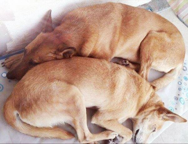 Piesek i suczka do adopcji - Masza i Ero razem na dobre i złe