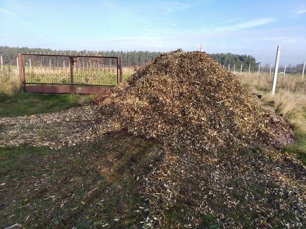 Ząbki zreby czyszczenie dzialek wycinka drzew koszenie trawy chwastow