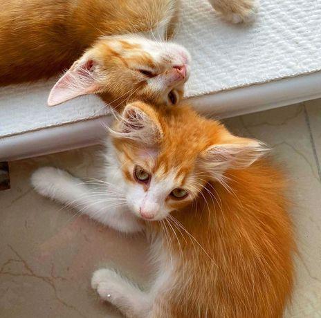Котенок Гоша ищет дом 2 месяца кот