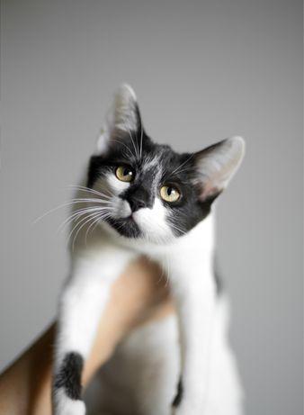 Кошенятко дівчинка, кошеня