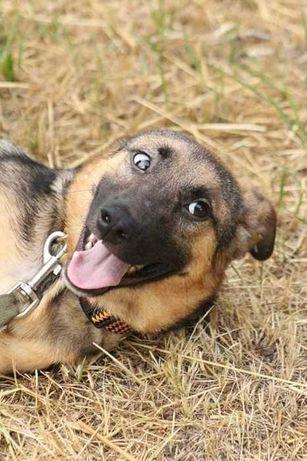 Нужен дом маленькой собаке Соне
