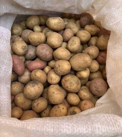 Картопля дрібна на корм тваринам свиням насінна картошка мелкая
