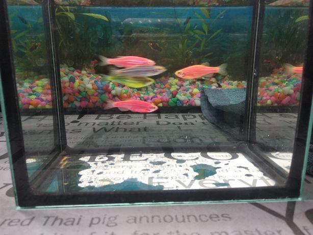 Бесплатно данио аквариумные рыбки