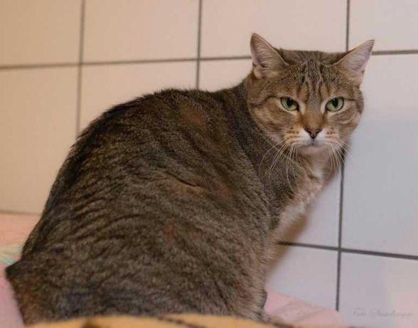Fiona czeka na  dom stały lub tymczasowy