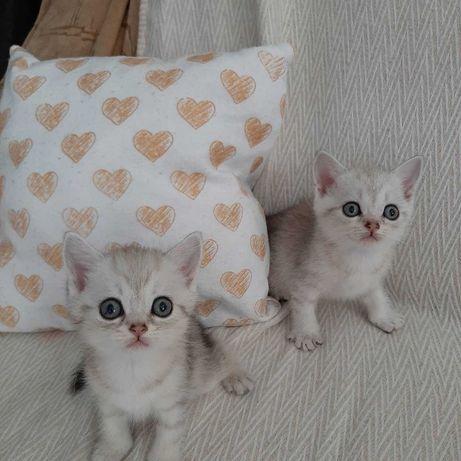 За красивыми котятами к нам!
