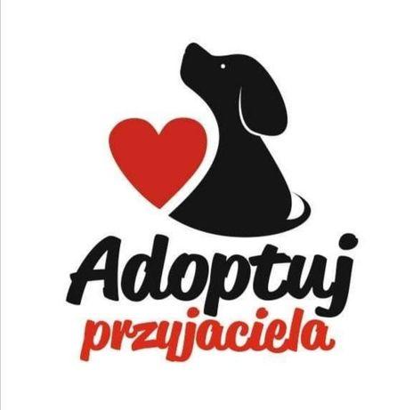 Psy ze schroniska polecają się do adopcji