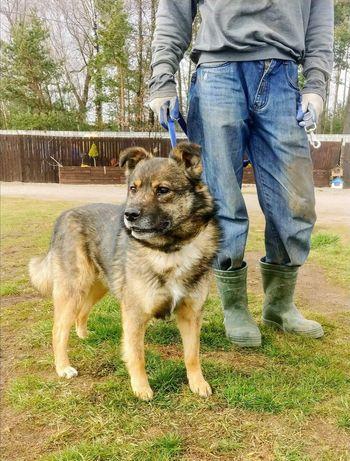 CHARLIE wspaniały psiak szuka kochającego i odpowiedzialnego domku