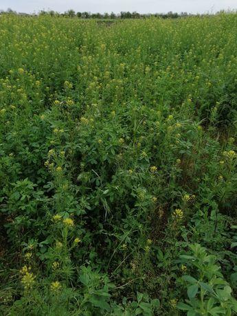 Продам или обменяю на зерновые культуры