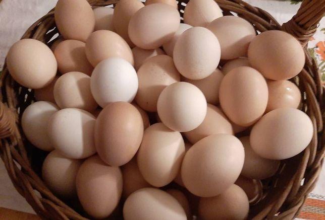 Jaja wiejskie 100% ekologiczne