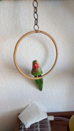 Papagaio em madeira