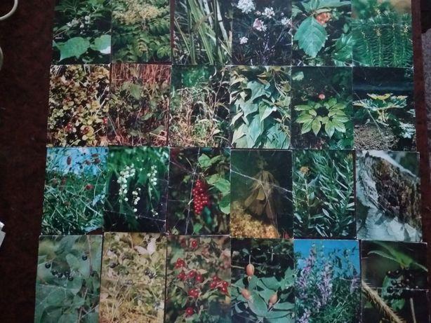 Комплект листівок Зелена аптека