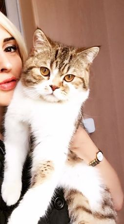 Очаровательный кот приглашает на рандеву!