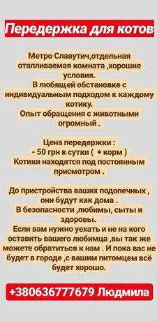 Передержка для котиков в Киеве!