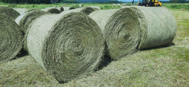 Siano bardzo dobrej jakości, dla koni oraz krów mlecznych - transport