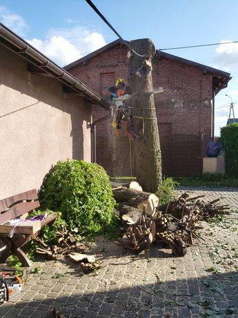 Wycinka drzew Wodzisław
