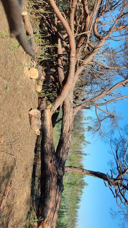 Limpeza de jardins ,corte e abate de Árvores
