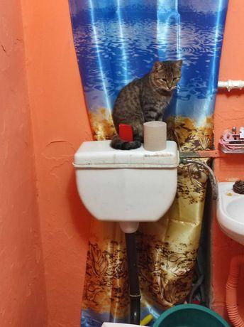 Пропал котик в Черкассах