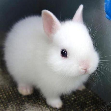 Кролики мини порода-для дома карликовые