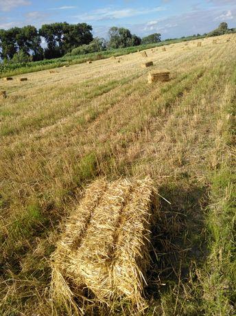 Солома в тюках пшенична, овсяна