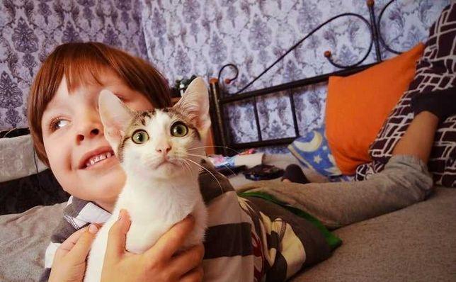 Котенок мальчик для души и любви