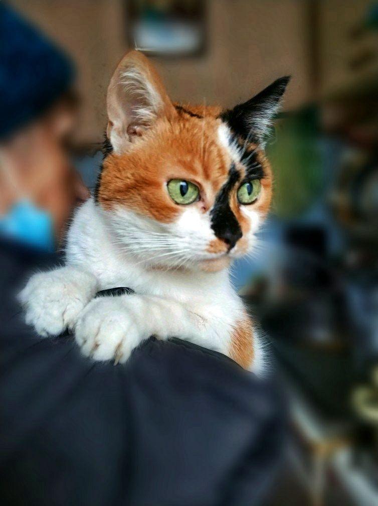 Киця, кішка, кішечка 2 роки
