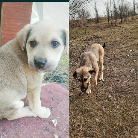 Помогите стерилизатор двух собачек из 7 щенят