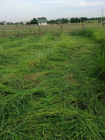 Віддам безплатно  скошену траву!