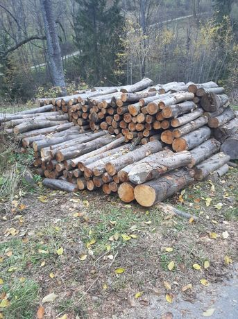 Drewno do wędzenia olcha