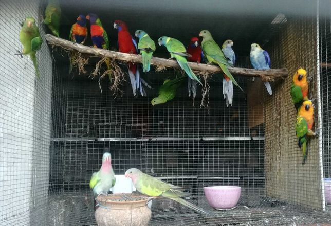 Aves diversas disponíveis