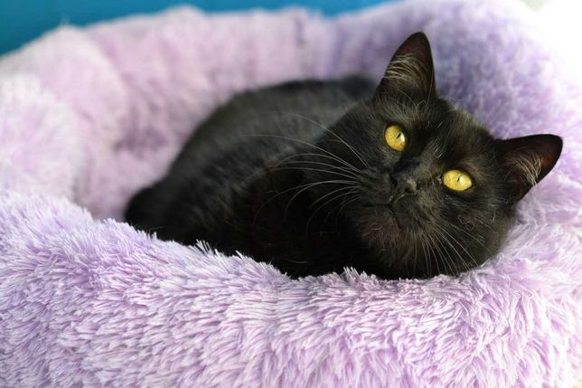 чорношуба плюшева красуня кішка 3р