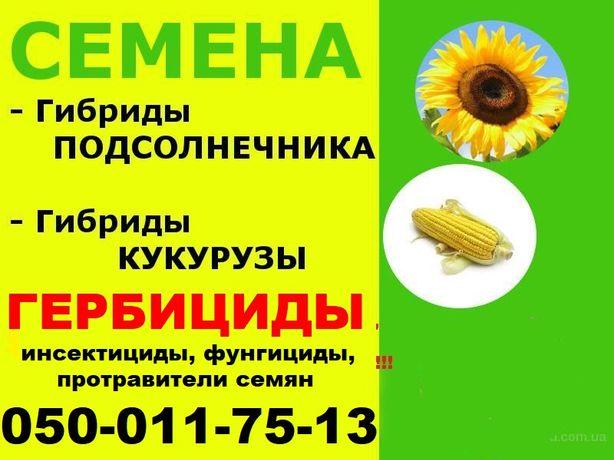 кукуруза Галатея,Хотин,Півіха,Оржиця,Гран,Плевен,Адевей кукурудза