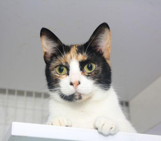 Кошечка Маргаритка (кот, кошка, котенок)