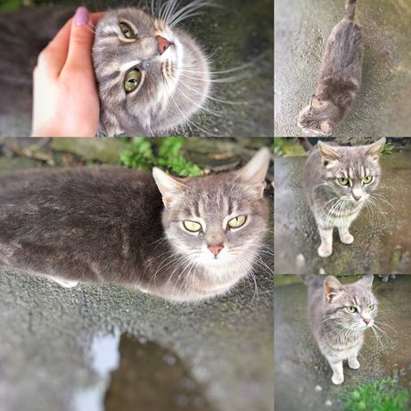 Кошка 2 года ищет дом!!