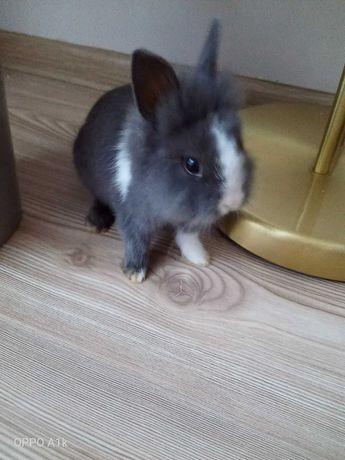 Maluszek króliczek