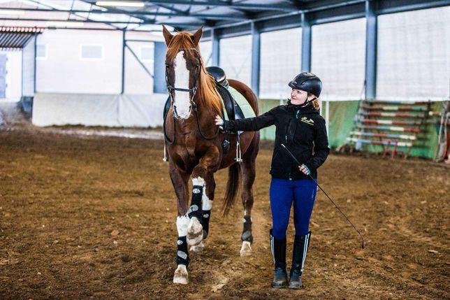 Trening z dojazdem do klienta oraz szkolenie i masaż koni