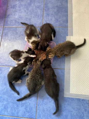Шукаємо дім прекрасним котяткам
