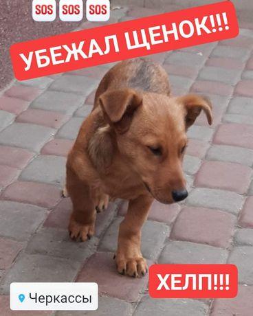 Убежал щенок в центре города! ХЕЛП!!!