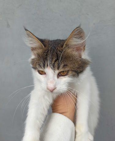 Ласковый котик Беляш