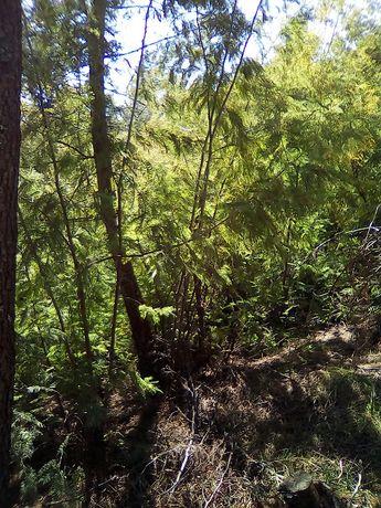 Limpezas Florestais, Limpezas de Terrenos - Trabalhos Especializados