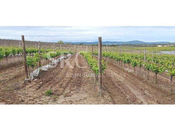Herdade Alentejo com vinha e gado