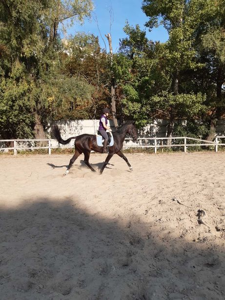Молодая кобыла, рослая лошадь (линия Корнет Оболенски)